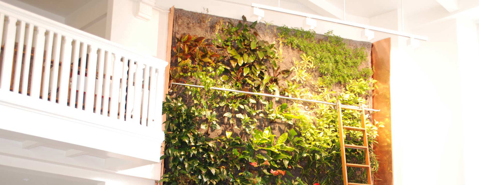 Luxury Living Wall Air Plants Image - All About Wallart - adelgazare ...